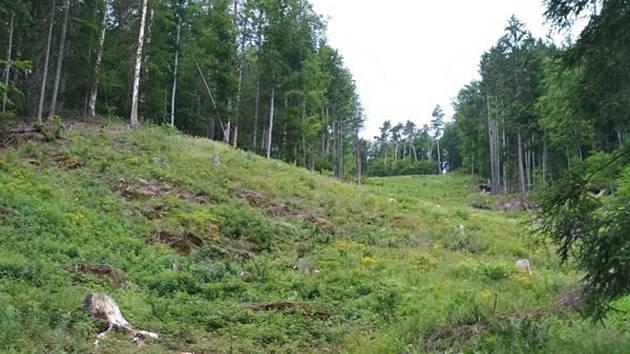 Za nevysazení stromů dostala firma pokutu