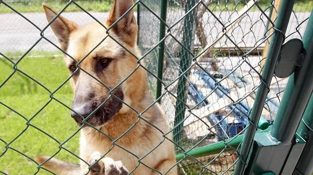 Po městech okresu se ročně potulují stovky psů. Jen ve Žďáře nad Sázavou jich městská policie ochytává kolem 130.