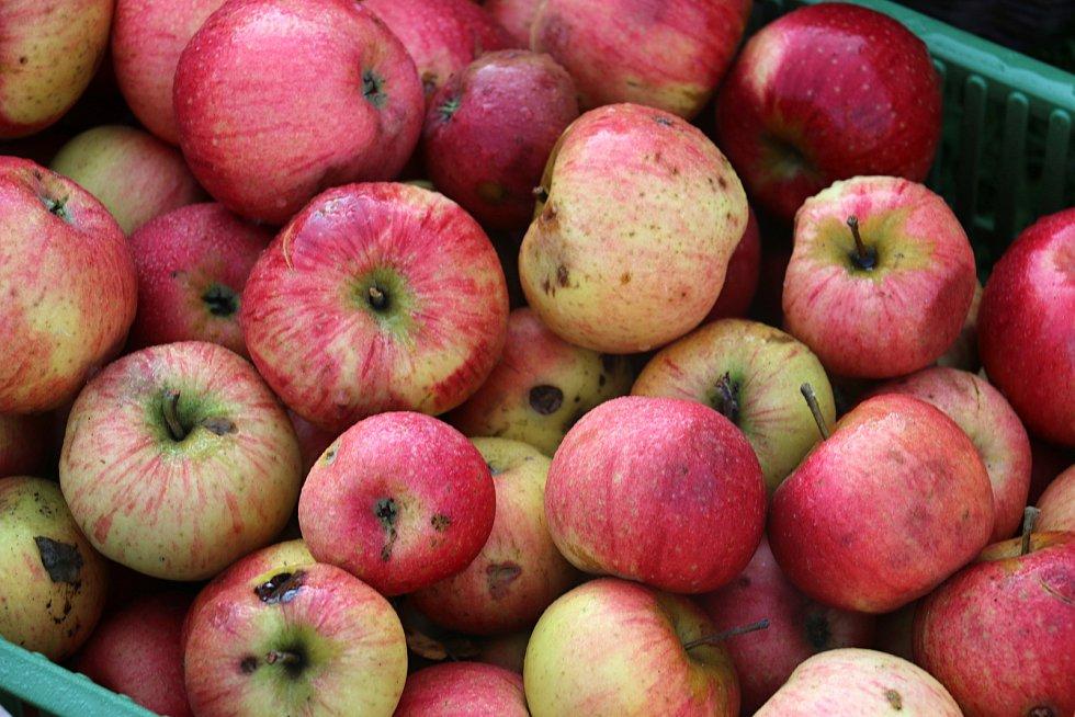 Moštování bývá často jednou z neoblíbenějších podzimních činností. Letosje ale jablek málo.