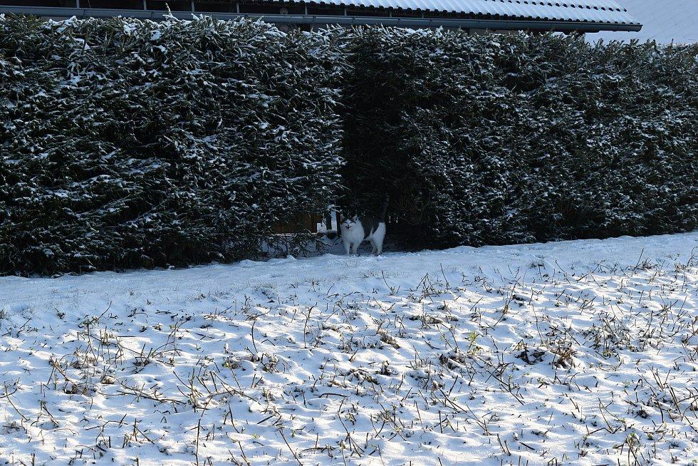 Sněžení hlásí meteorologové i na další dny.