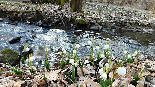 Přestože bílé květy už zaplavily břehy, parkoviště zeje prázdnotou.