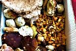 Lesy na Bystřicku a Velkomeziříčsku jsou plné hub.