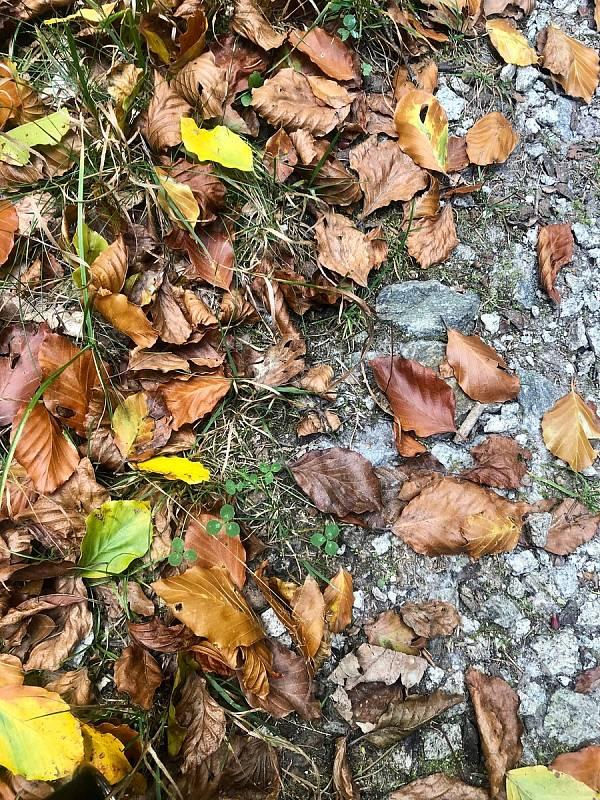 Podzim přichází na Vysočinu, teplých dnů bude méně.