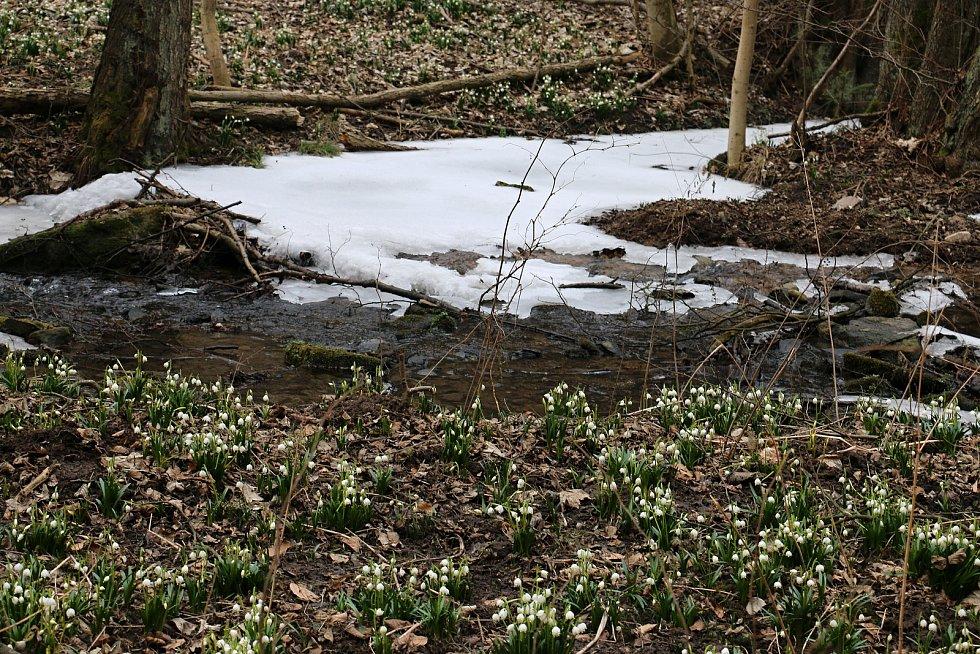 Břehy Chlébského potoka na jaře.