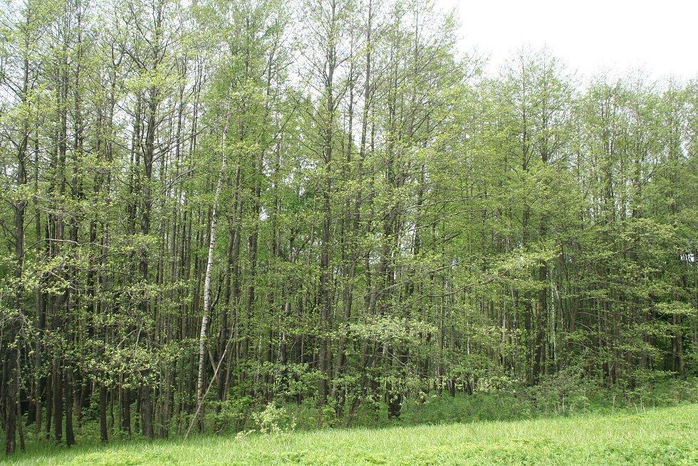 Toto území je pro svou botanickou hodnotu navrhováno mezi chráněná území.