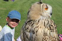 Děti si užívaly ukázku výcviku dravců a sov.