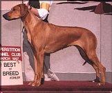 Pes Shef, staforšírdský bulteriér, starý asi 3 roky. Přivezla jej hlídka MP Aš. Psa vydá útulek jen člověku, který má zkušenost s takovými plemeny.Pes je velmi agresivní na jiné psy a na některé lidi. Spíš do