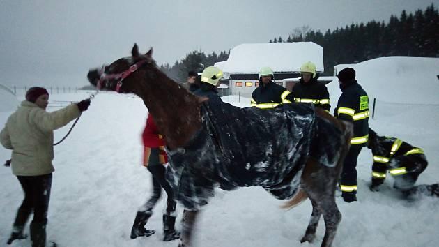 OBRAZEM: Dobrovolní hasiči pomohli vytáhnout koně ze závěje