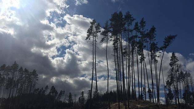 Podívejte se na fotky vykácených lesů v okolí Velkého Meziříčí.