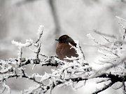 Ptáci se probouzejí postupně.