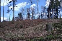 Kůrovcová kalamita postoupila i do výše položených lesů.