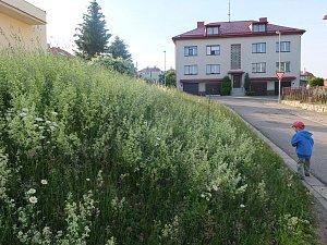 Sečení trávy ve městě? To je teď ve Žďáře ožehavé téma