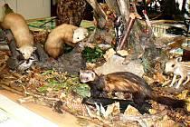 Výstava seznamuje návštěvníky také s některými lesními obyvateli.