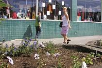Okrasná zeleň v centru města se stává častým terčem nenechavých rukou zlodějů. Tyto krádeže se i přes přítomnost kamer podaří objasnit jen málokdy.