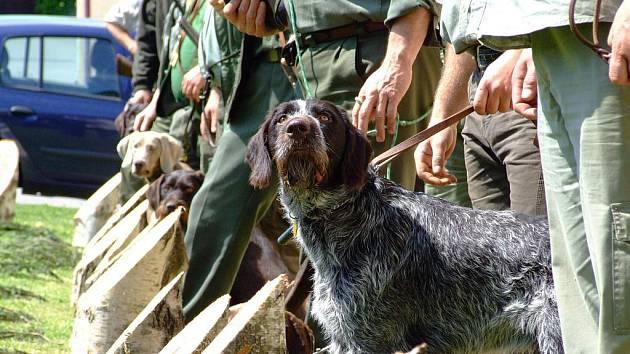 Psi v Netíně ukázali, jaké mají vlohy k lovu.