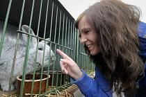 Ve Velké Losenici se uskuteční Podpeperská výstava králíků, drůbeže, holubů a morčat.