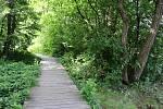 Naučná stezka okolo Konventského rybníka.