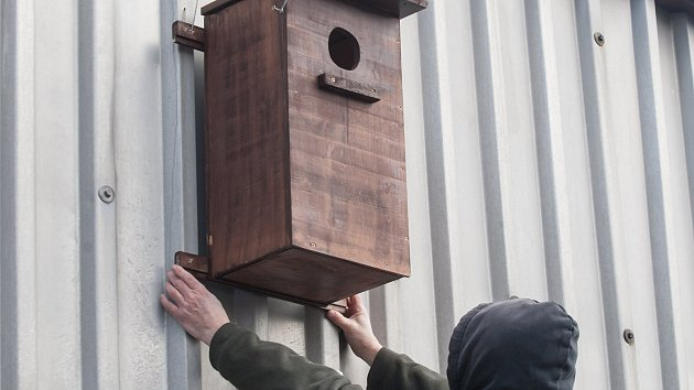 Instalace dřevěné budky vhodné ke kavčímu hnízdění na budovu firmy Satt ve Žďáře nad Sázavou.