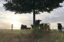 Odborná porota ocenila především principy ekologického zemědělství a provoz bez chemie.