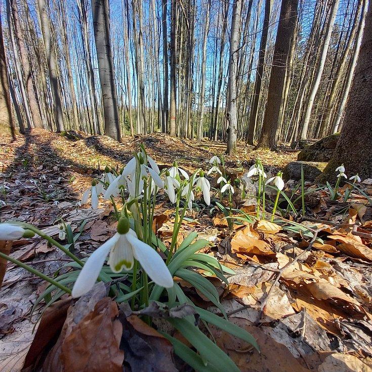 Příroda se pomalu probouzí ze zimního spánku