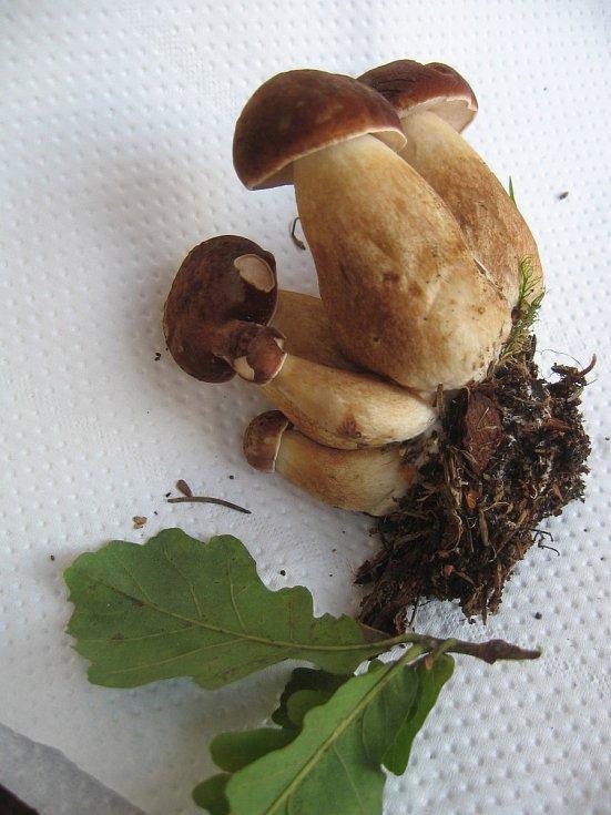 Na Žďársku pořádně zapršelo, jakmile se oteplí, houby zase porostou.