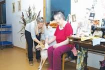 Dobrovolnické sdružení Cantes navštěvuje se svými psy sociální zařízení, školky i domovy důchodů.