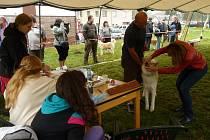 Ve Svratce v sobotu hodnotili šestadvacet psů japonského plemene akita inu všech věkových kategorií.