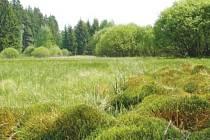 Na rašelinných lukách se vyskytují vzácné druhy rostlin i živočichů. Najít tam lze například vachtu trojlistou, prstnatec májový , skokana krátkonohého či čolka horského.