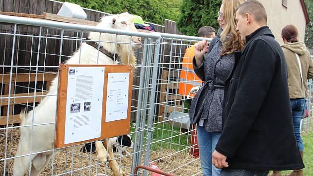 Na Výstavě Vysočiny letos návštěvníci obdivovali asi tři tisíce zvířat.