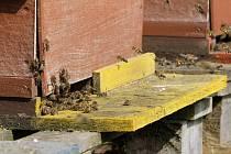 Jedním z nejobávanějších onemocnění včelstev je mor včelího plodu.