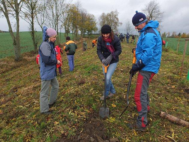 V krajině Žďárska chybějí místa pro novou výsadbu stromů