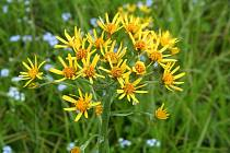 V lokalitě lze najít zajímavé druhy rostlin.