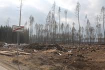 Les u Jamného a Rytířska zničil kůrovec.