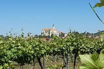 Rozjíždí se sezóna výletů Krajem vína po Moravských vinařských stezkách. Jejich cílem bude i podpora tornádem poničených obcí
