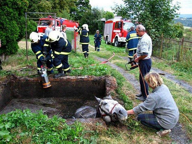 Také zvířatům, která uvízla v jímkách či nechráněných skružích, umějí pomoci hasiči.
