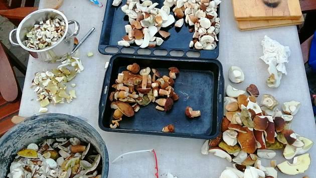 Houby přinesené z lesa obohatí houbařův jídelníček.