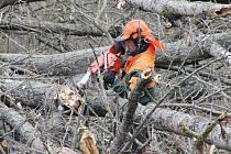 Vzrostlé topoly u řeky Sázavy v blízkosti parku Farská humna ve Žďáře nad Sázavou začali kácet dřevorubci.