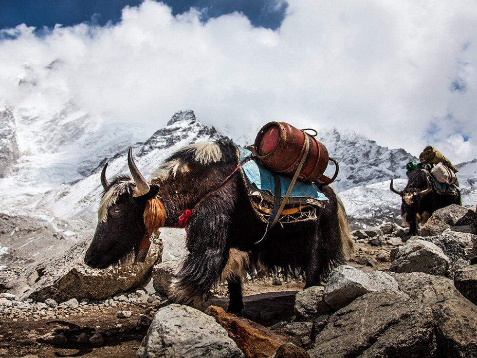 Diváci v Novém Městě uvidí i dokument Himalaya.