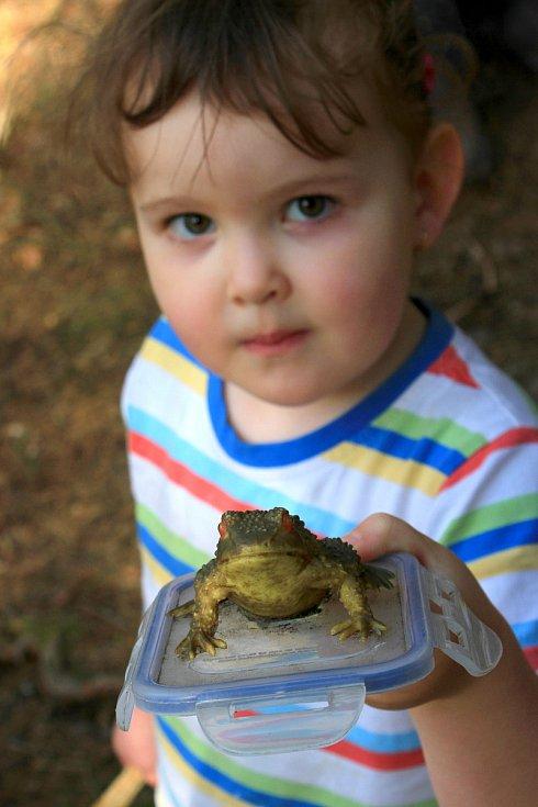Tady zas hlídá kešku žaba