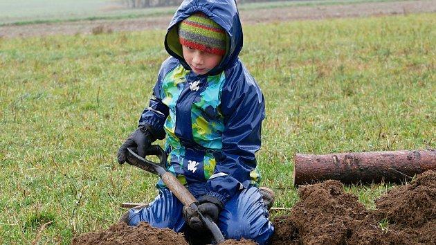 Vysadili osmdesát stromů, i za deště. U Budče vyrostlo nové ovocné stromořadí