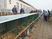 Největší chovatelská výstava v Kraji Vysočina přilákala o víkendu davy návštěvníků.