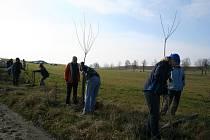 Akce zaměřené na vysazování stromořadí na Žďársku se konají rok co rok.