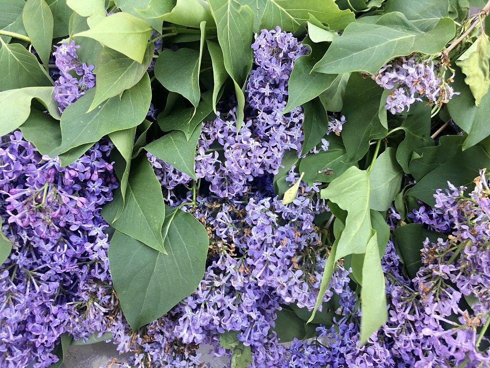 Domácí sirupy z květů a plodů se staly hitem.