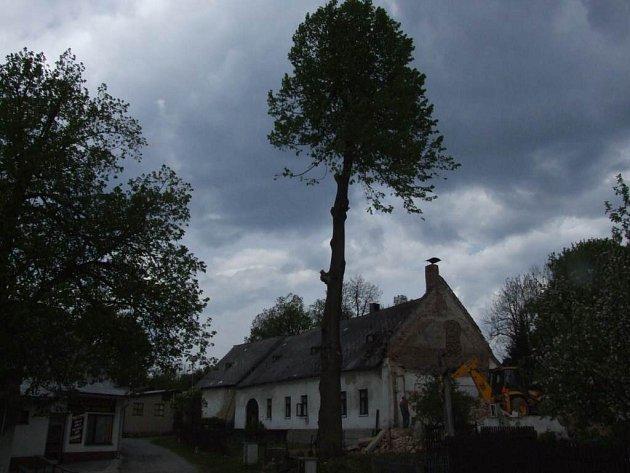Ještě před týdnem měl historický strom ve Vlachovicích spoustu větví.