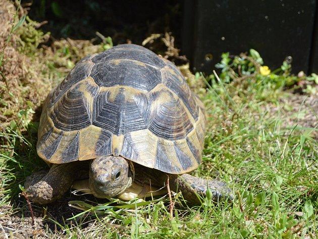 Želvy zůstanou v domově pro seniory po celé léto