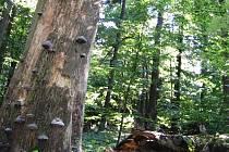 Žákova hora patří mezi zvláště chráněná území.