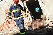 Kynologové se psy hledali v ruinách zavalené lidi.