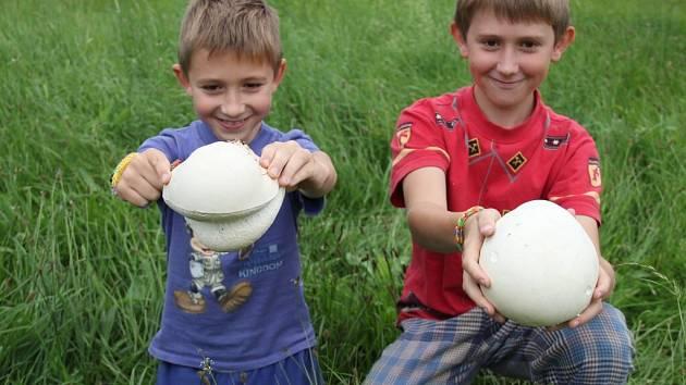 Ze dvou kusů vatovce, které Václav (na snímku vlevo) a Jiří (vpravo) Novákovi našli v trávě nedaleko Habří, budou mít hned několik obědů.
