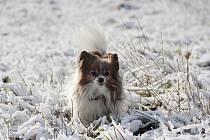 První sníh zimy 2015/2016 na Žďársku.