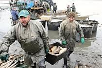 Na Žďársku byly zahájeny podzimní výlovy rybníků. U některých z nich při výlovu rybáři nabízejí i prodej ulovených ryb, případně specialit z čerstvých ryb připravených.